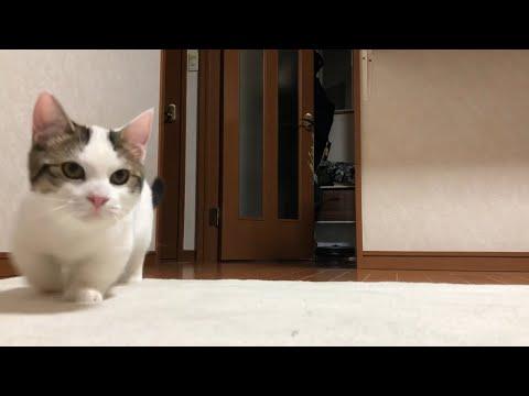 が 動画 猫 見る